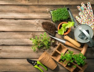 Jardin que faire au mois de f vrier retrouvez tous nos conseils - Que faire au jardin en fevrier ...