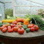 que faire au jardin au mois de mars ?