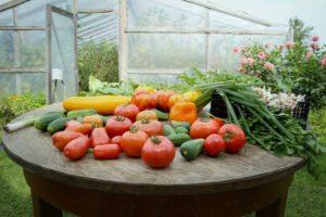 Jardin Que Faire Au Mois De Mars Conseils Jardinage Par Atout