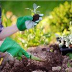 Que faire au jardin au mois de mai ?
