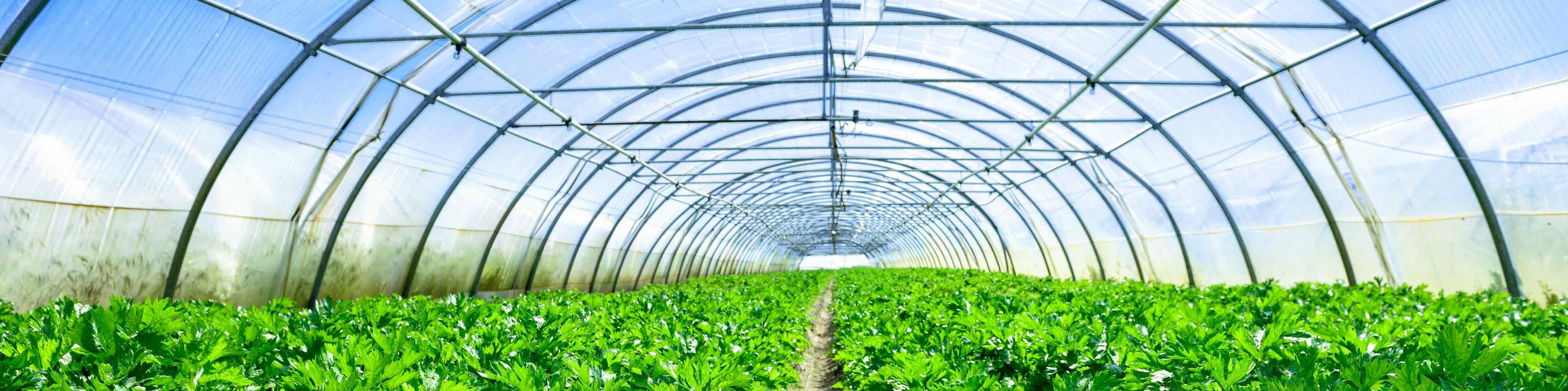Serre de jardin : comment choisir ? Les conseils Atout Loisir