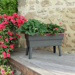 Découvrez toute notre sélection de bacs à fleurs et jardinières en pin traités contre l'humidité. Que ce soit pour vos plantes, plantes aromatiques, plantes grimpantes, plantes volumineuses, arbustes, nous proposons des bacs à fleurs de différentes tailles et différentes formes, pour répondre au mieux à vos besoins.