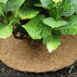 Retrouvez ici notre sélection pour le forçage et le paillage : protégez et favorisez vos plantations grâce aux cloches potagères. Si vous souhaitez limiter l'arrosage et favoriser l'activité biologique du sol, optez alors pour des disques de paillage naturel !