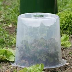 Les cloches potagères à blanchir et à forcer sont idéales pour protéger et favoriser les plants unitaires comme les salades, endives et céleris ou autres !