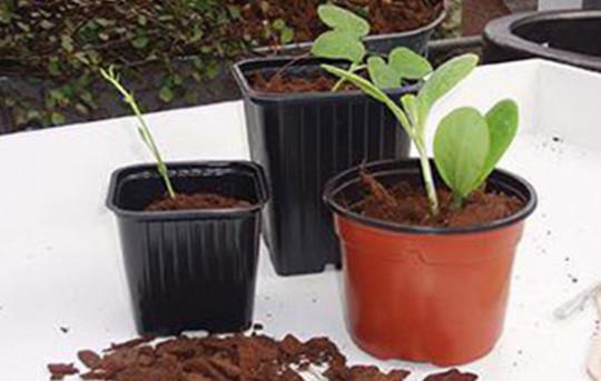 Pots pour semis